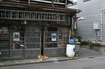 板金屋の柴犬.JPG